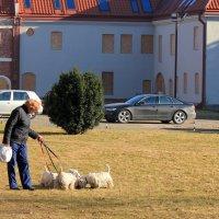 Собаки :: Наталья Лунева
