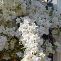 Цветы тайланда :: anna kozlova