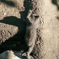 борьба с тенью :: Михаил Николаев