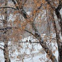 Снегопад :: Дмитрий Боргер