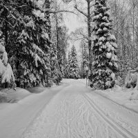 Лыжня :: vladimir Bormotov