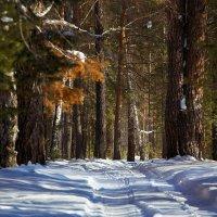 Forest_1 :: Александр Рубцов