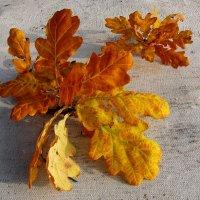 Осенний лист дуба :: Владимир Гилясев