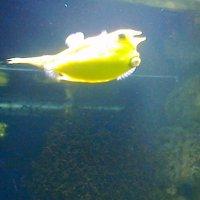 Кавайная рыбка :: Василиса Подгорнова