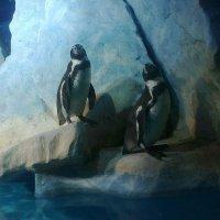 фотлогеничные пингвины :: Василиса Подгорнова