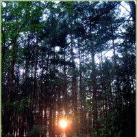 Лес на закате :: Татьяна Пальчикова