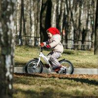 Велосипедист :: Александр Сорокопуд