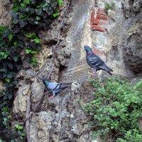 Флорентийские голуби... :: ФотоЛюбка *