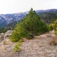 в горах :: LENUR Djalalov