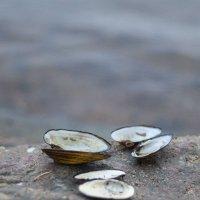 Островок на Вуоксе. Приозерск :: Tristana Tiamat