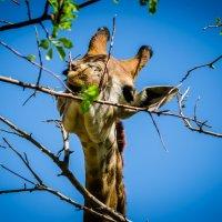 жираф по имени Астана )) :: Dmitriy Khvan