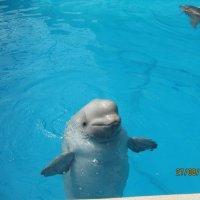 дельфин :: Василиса Подгорнова