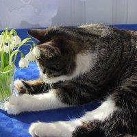 Весна для всех в радость :: Mariya laimite
