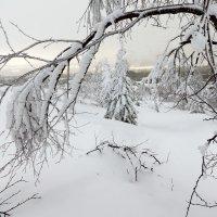 о зиме.. :: Игорь Чубаров