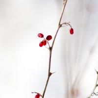 Красота в простоте :: Нина Калитеева