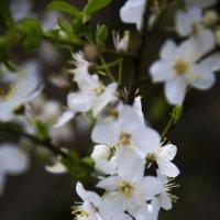 Весна! :: Сергей Шварчук