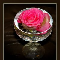 Роза в бокале :: Тамара Бучарская