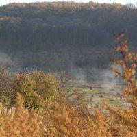остатки сожженых листьев :: Оля Cмирнова