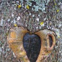 Сердце дерева :: Михаил Ананьев