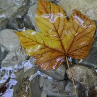 Кленовый лист на пути к водопаду.... :: Анастасия Воробцова