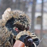 Почувствовать себя немного зверем :: Ирина Данилова