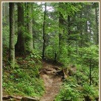 Сходница и лес :: Юрий Муханов