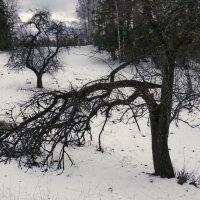 19 марта, старый сад :: Юрий Бондер