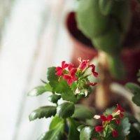 Квітка :: Сурикат Сусликов