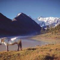 страна белых коней..))) :: Максим Гололобов