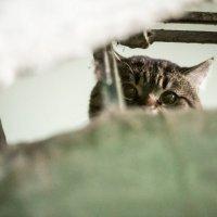Коть... :: Павел Свинарев