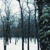 Лес :: Сурикат Сусликов