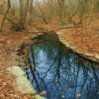 Отражение в ручье... :: Юрий Поляков