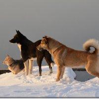 Собачки смотрят на рассвет в тумане над Окой :: NICKIII Михаил Г.