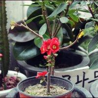 восточный цветок :: ангелина гончарук