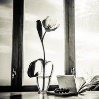 Тюльпан :: Natalia Fedina