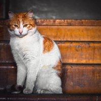 Все тот же кот. :: Марина Матвеева