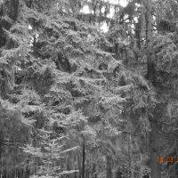 Зимний лес :: Katherine Mozgo