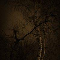 ночные впечатления :: Лидия Кичигина