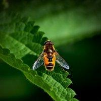 желтый мух :: gribushko грибушко Николай