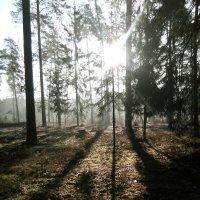 Утро в лесу :: Валентина Лапочкина