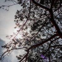 дерево :: Диана Матисоне