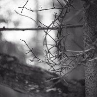 Дух Зимы :: Eugeni Lis