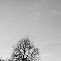 Одиноко :: Елизавета Сноу