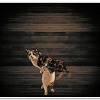 Кошки :: Евгений Кочуров