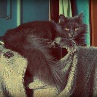 Серая кошка :: Лидия Кичигина