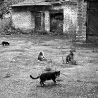 Город котов. :: сергей лебедев