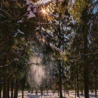 А снег искрил и падал.... :: Владимир Колесников