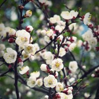 Весна :: Светлана Росинская