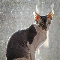 Кот под солнцем :: Андрей Качин