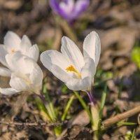 Весна 2 :: Николай Климович